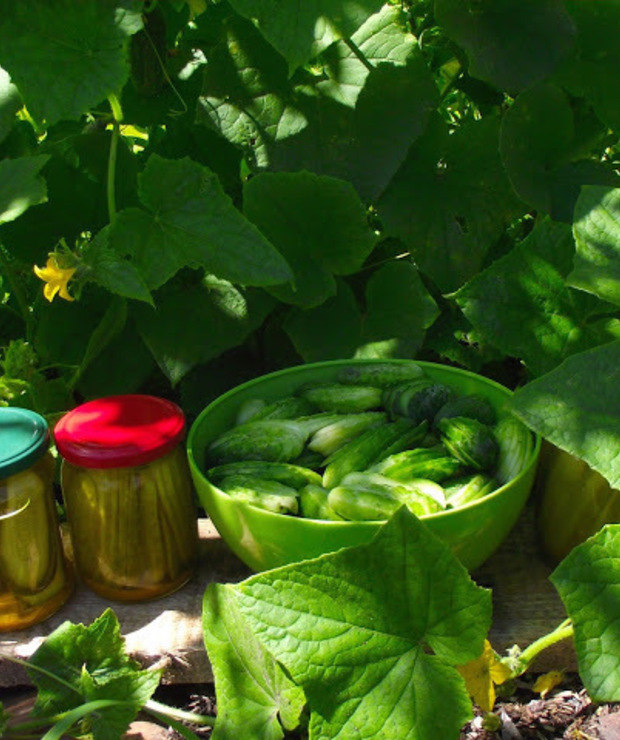 Ogórki kanapkowe z kurkumą - Warzywne