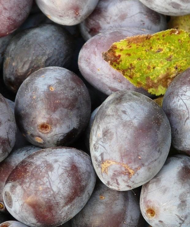 Jak mrozić śliwki - Owocowe