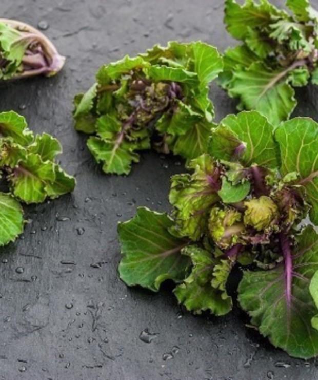 Nowe warzywo na polskim rynku – Kalerosse - Produkty