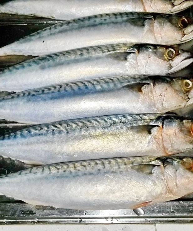 Makrela grillowana a nie wędzona - Makrela