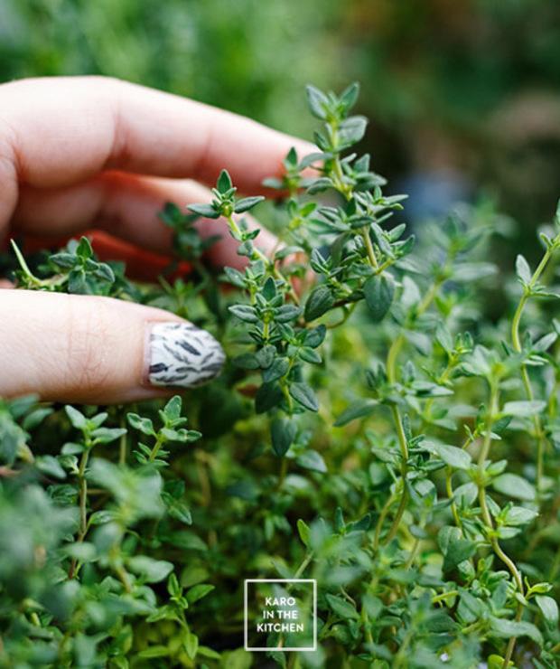 Domowe kostki ziołowe – świeże zioła przez cały rok - Inne