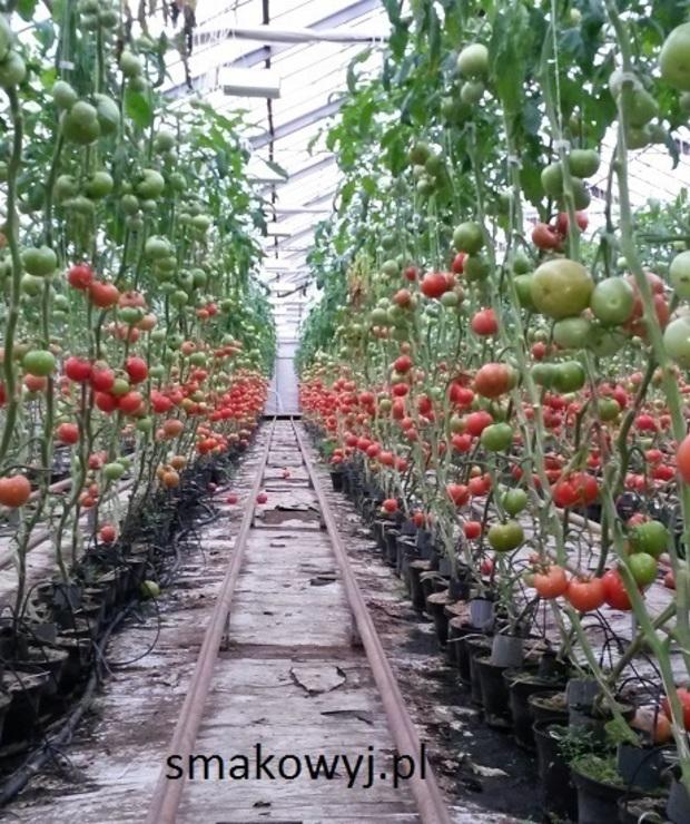 Pomidory z polskiej uprawy - Surówki