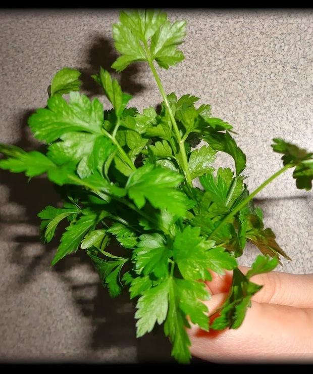 Zielone placuszki z brokułem i pietruszką w roli głównej - Warzywa
